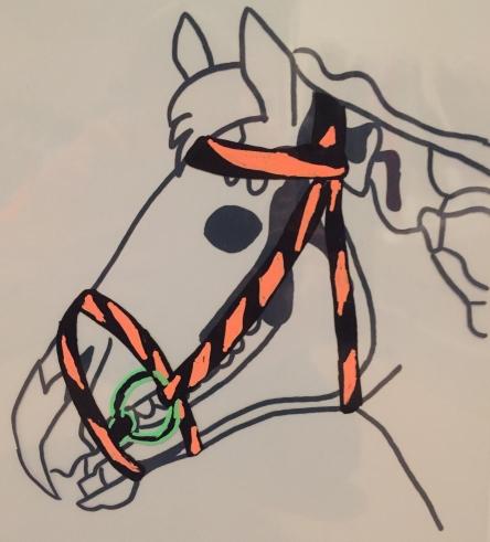 Der Einfluss des Zaums auf die knöchernen Strukturen des Pferdekopfes.